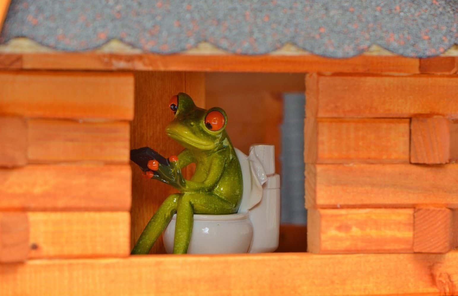 frog-1500x1000