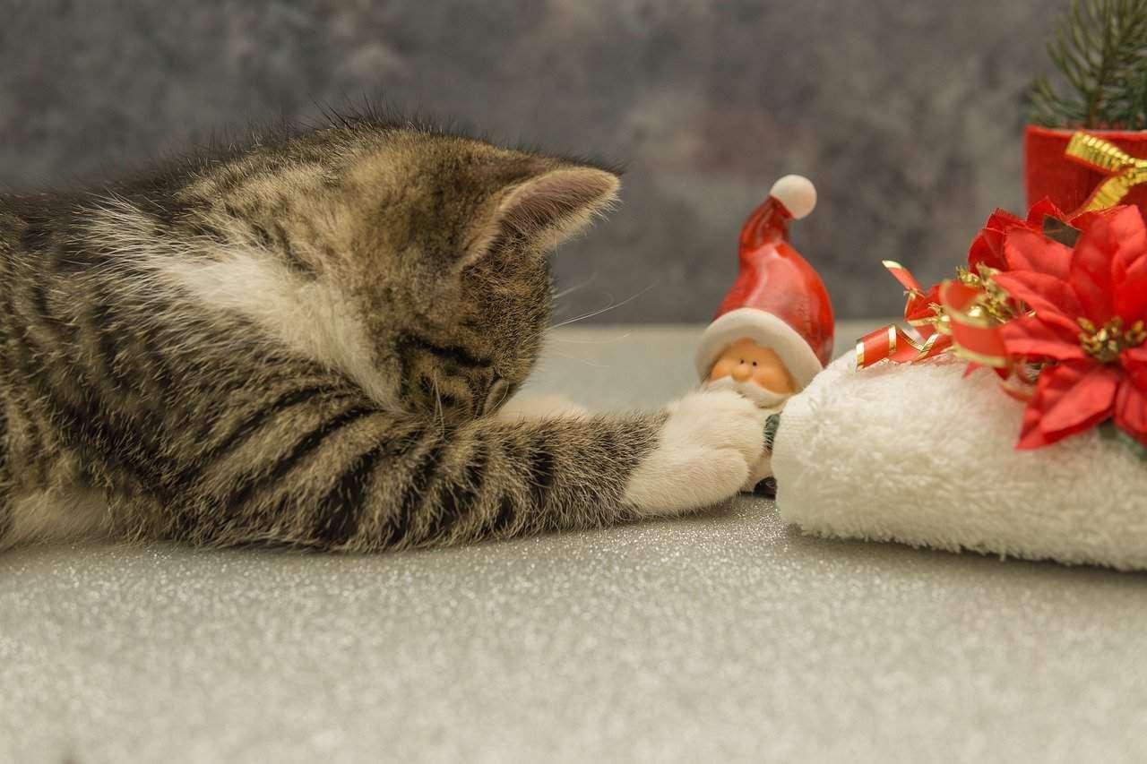 cat-4636867_1280