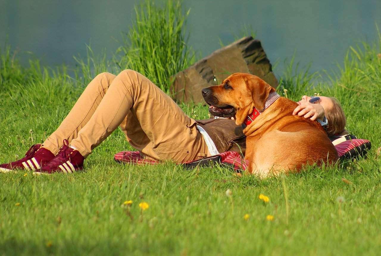 dog-764484_1280